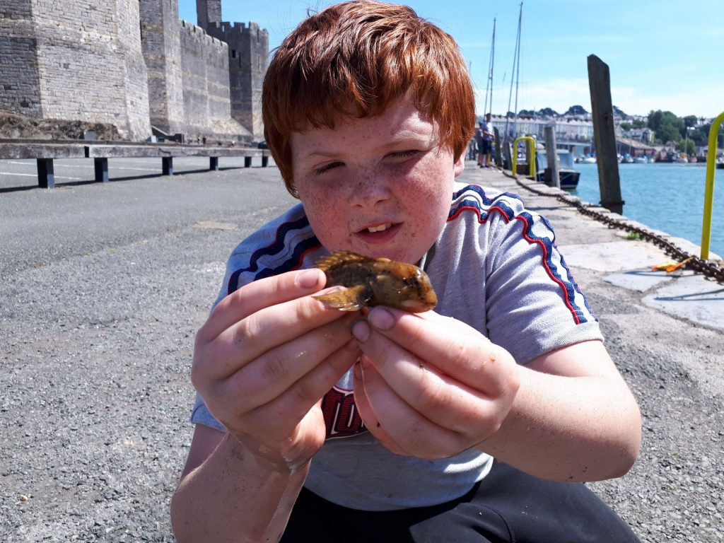 The image show myself catching a small fish using the LRF method in Caernarfon harbour