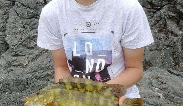 Ballan wrasse caught at Ty Croes
