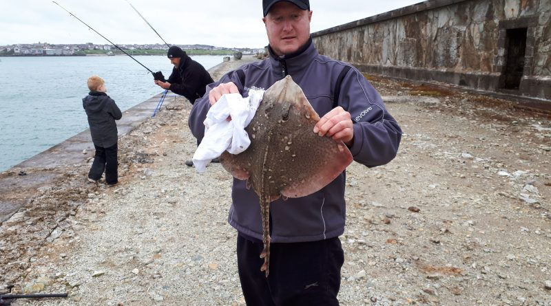 a Thornback Ray caught when fishing at Holyhead Breakwater