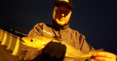 Picture of a whiting caught whilst fishing at Otterspool