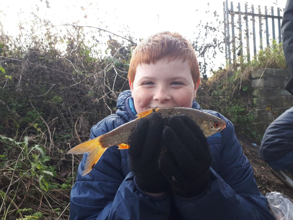 Roach caught in a small brook in Wigan