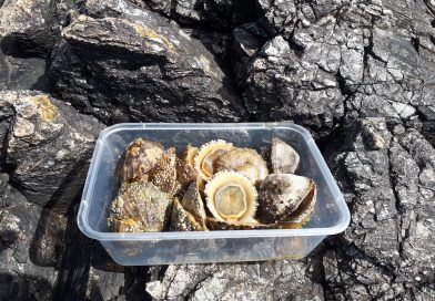 Review of Limpets as sea fishing bait