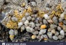 Review of Whelks and Winkles as sea fishing bait